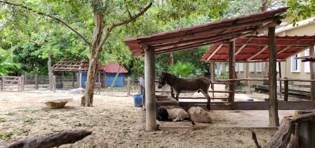 Sandos Caracol Eco Resort Fotos